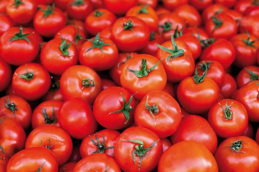 Орошение помидоров