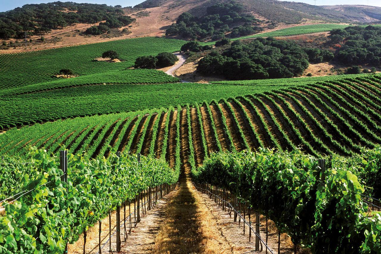 орошение виноградников